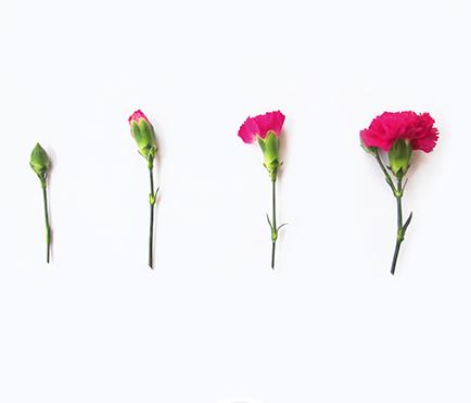 Blooming-Flower-Post-Sm