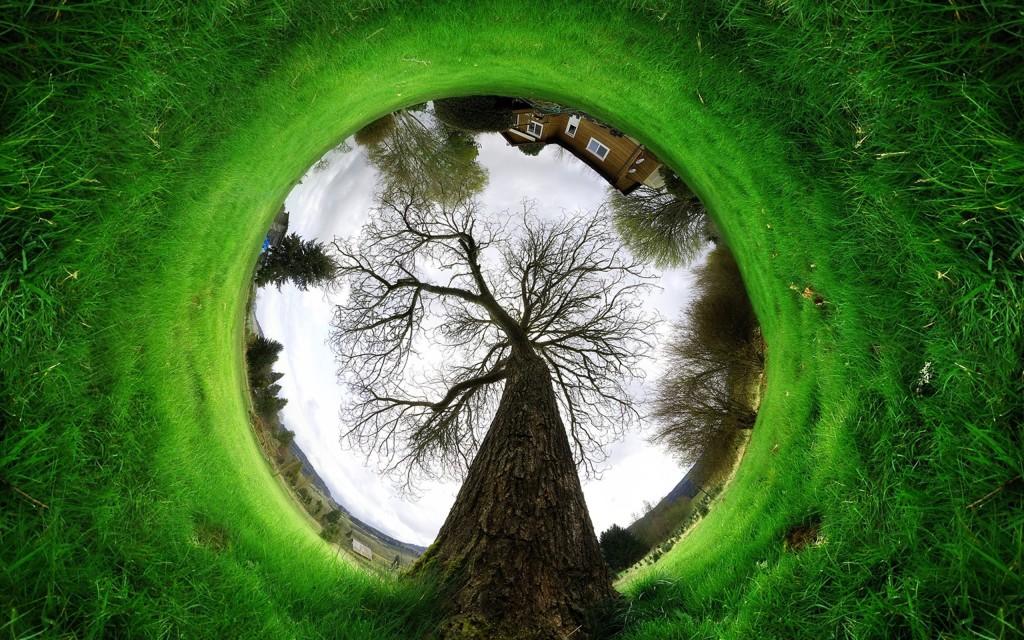 tree-of-life-67785