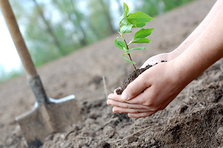 plant-tree-for-earth-day
